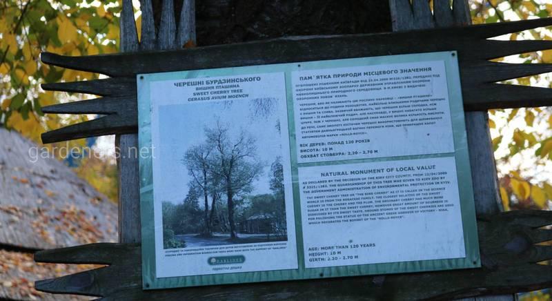 Черешни Бурдзинского в зоопарке.JPG
