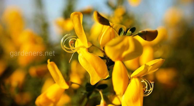 библейские растения.jpg