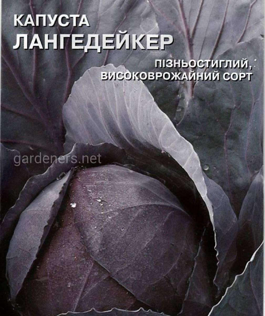Сорт капусты Лангедейкер