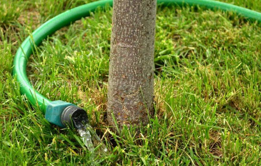 Как правильно поливать деревья и кусты в саду