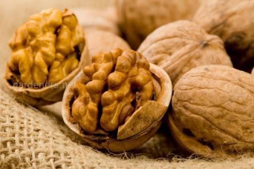 Как заморозить орехи