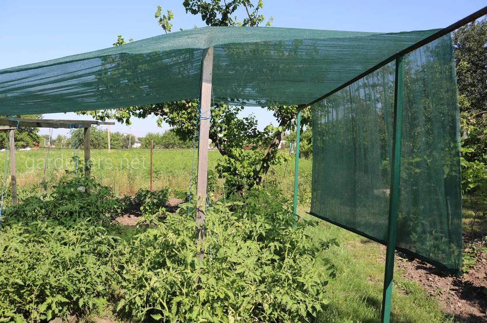 способы спасения растений от жары