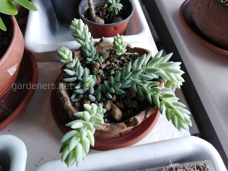 Как правильно ухаживать за комнатными растениями в марте?