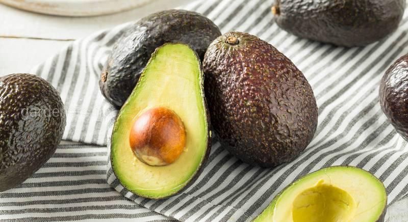 Как выбрать авокадо, кокос и помело