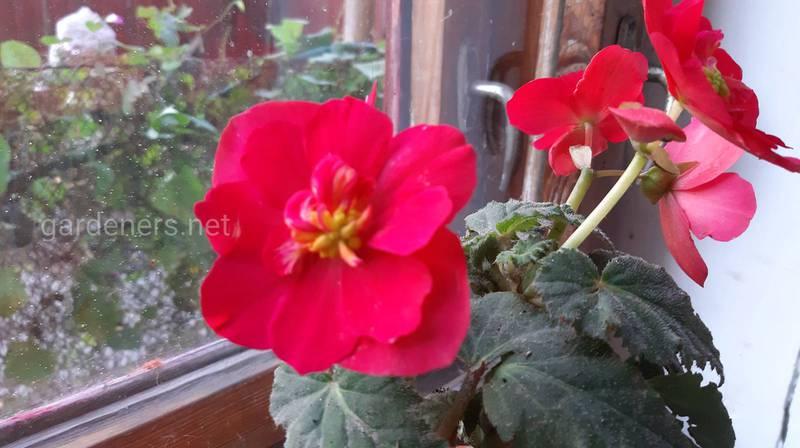 Какие цветы приносят в дом положительную энергию?