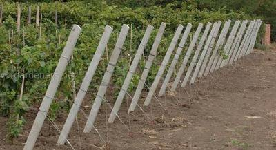 Железобетонные столбы для винограда малины Запорожья