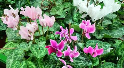 ТОП-10 натуральных подкормок для комнатных растений