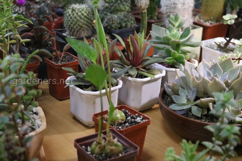 дом природы-кактусы