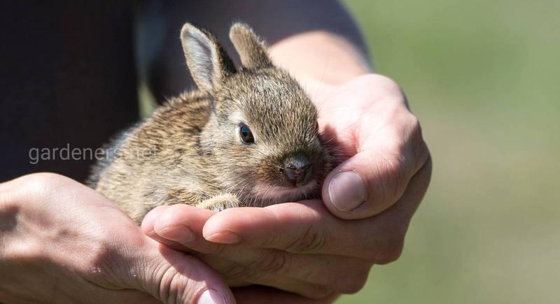Как начать бизнес на кроликах