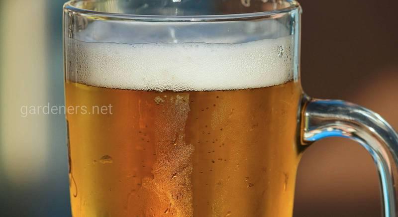 Все про крафтове пиво
