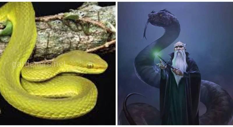 Виды животных названные в честь киногероев