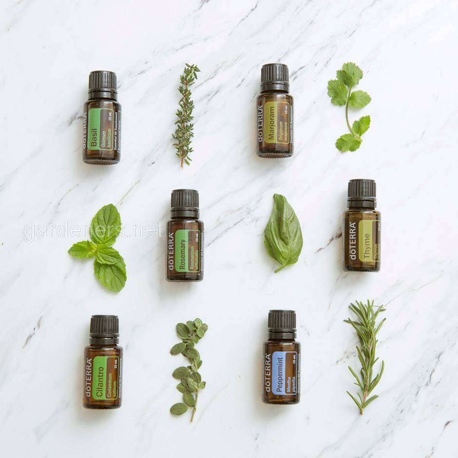 1x1-using-herbal-oils-product-blog-us-english-web