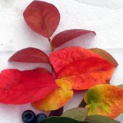 """ООО """"Lucky PLANTS"""""""