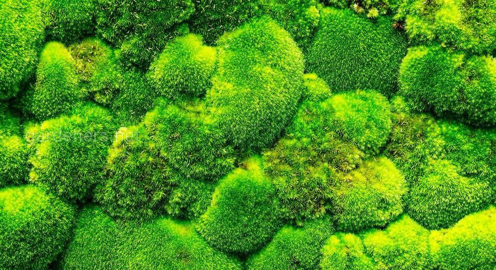мох в саду.jpg