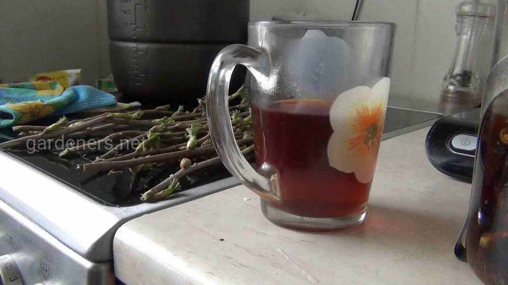 Чай из побегов черной смородины