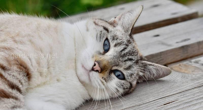 Вибираємо кота по знаку зодіаку 1