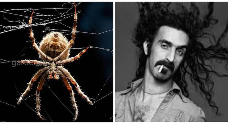 Види тварин названі на честь легендарного рок-музиканта Френка Заппи