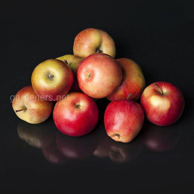 Топ-8 интересных фактов о яблоне