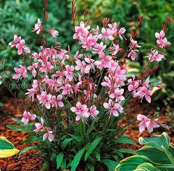 Какие садовые цветы цветут все лето?
