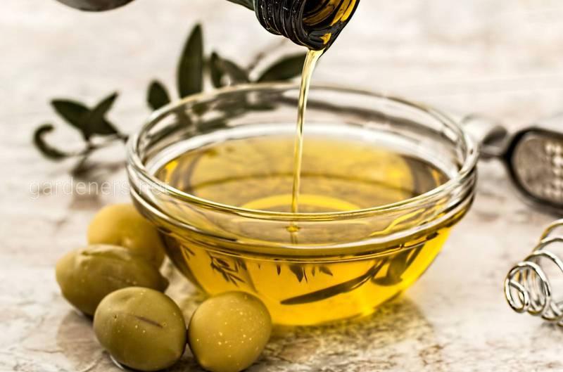 Оливкова олія - скарбниця природних речовин