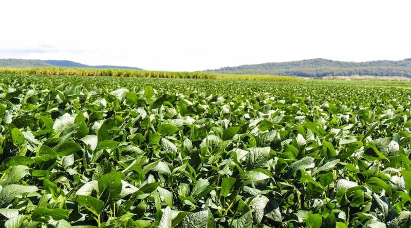 Какие овощи собирать, а какие можно сеять в первой половине июля?