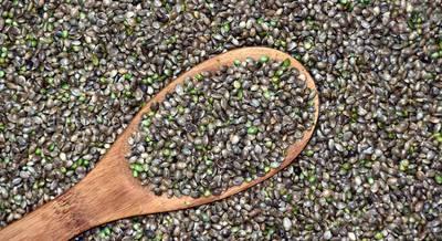 семена конопли.jpg