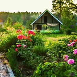 Flower&Garden