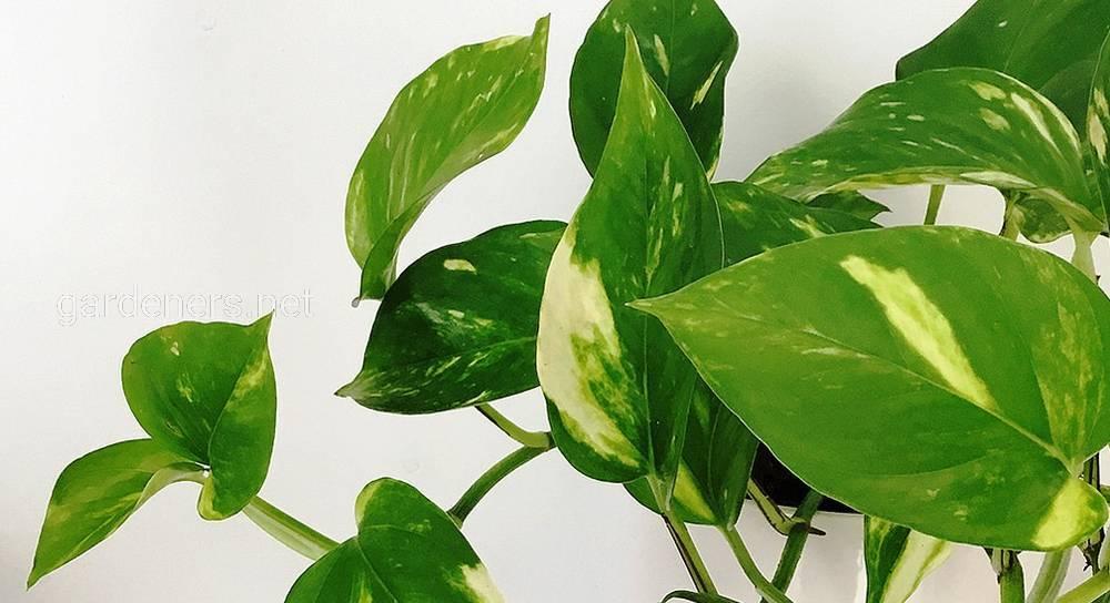 растения которые очищают воздух.jpg
