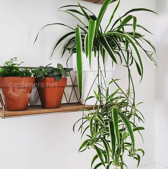 Какие условия необходимы для правильного роста и развития комнатных растений?