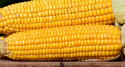 corn-2691456_1920.jpg