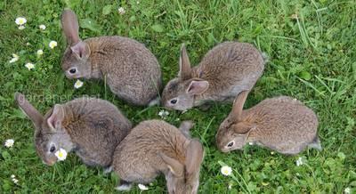 Как разводить кроликов 1