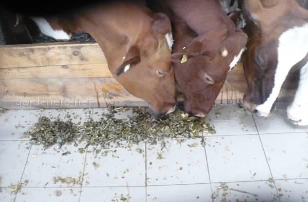 и молочный комплекс агрофирмы Петродолинская