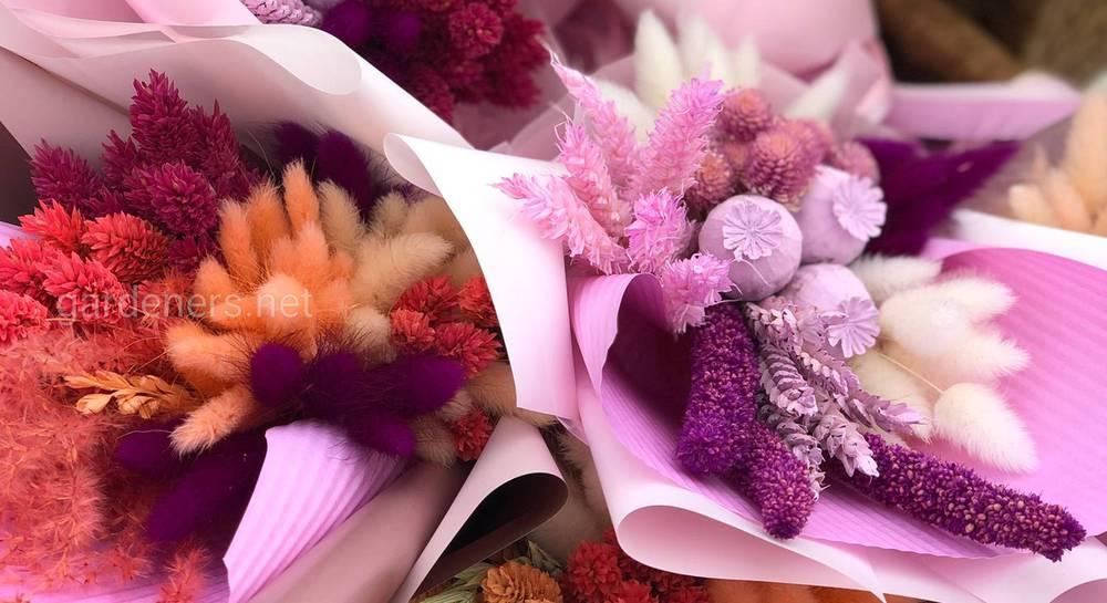 Сухоцвет для декора