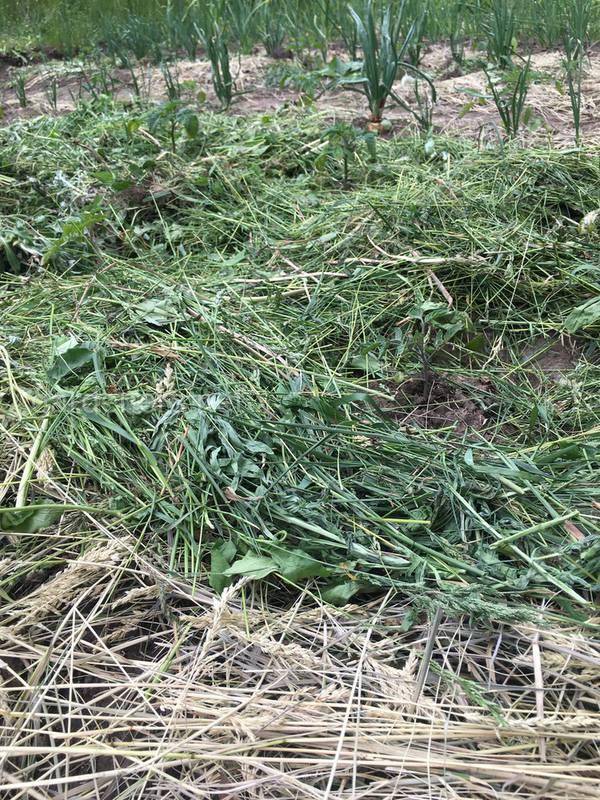 Что можно использовать в качестве мульчи? Почему стоит избегать зеленые растительные остатки для мульчирования?