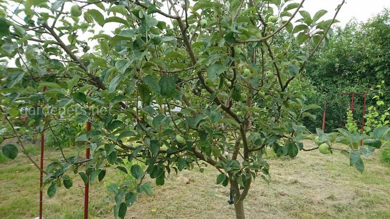 Осваиваем технику обрезки: особенности формирования кроны молодого дерева