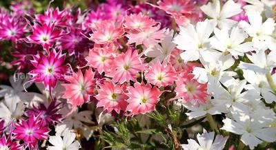 Подзимний посев цветущих растений