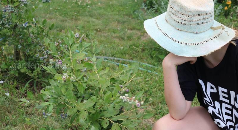 Калий для лучшей устойчивости культурных растений