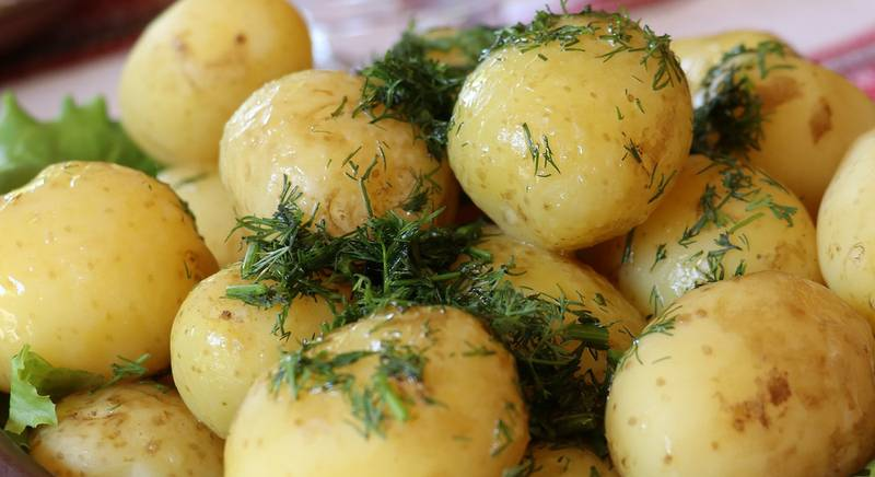 ранний картофель.jpg