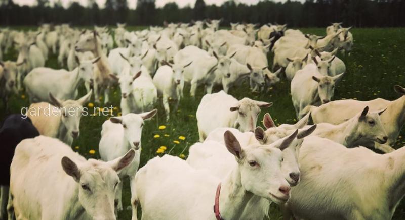 Ферма «Надежда»