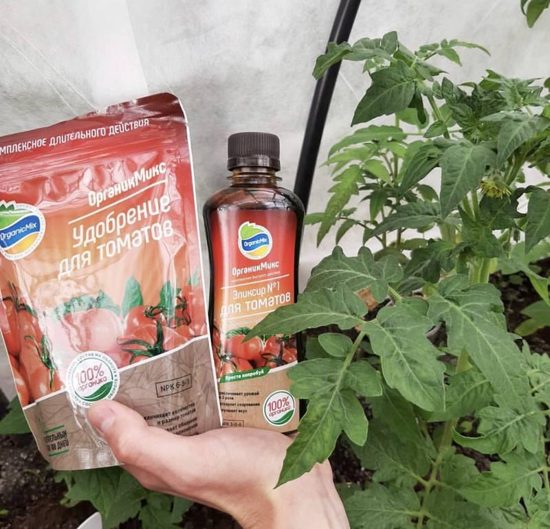 Роботи в теплиці: томати