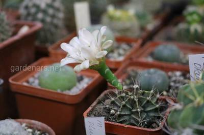 выставка всевозможных кактусов 21 марта.JPG