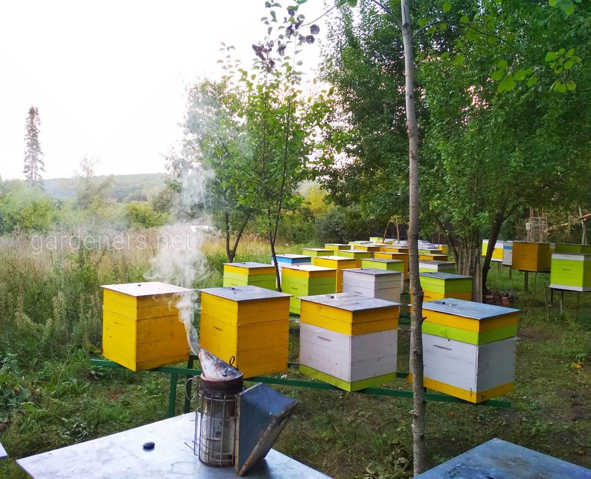 пчеловоды амурской области фото раскрывала подробностей своего