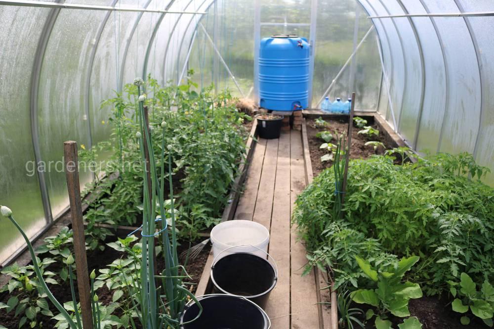 Правильные грядки для теплицы: минимум забот – максимум урожая!