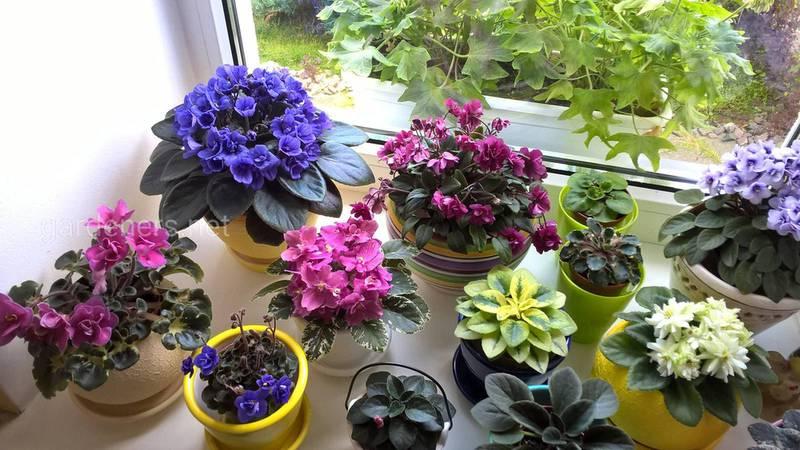 Искусственное освещение домашних растений осенью и зимой