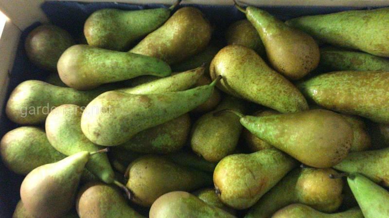 Як уникнути пошкодження овочів етиленом? Класифікація овочів по температурі та вологості зберігання