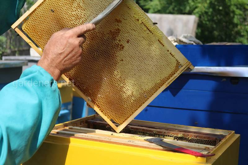Квітень — час перевірки чисельності бджіл та зміцнення громади!