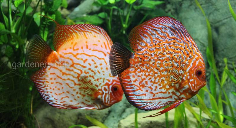 Що повинен знати початківець-акваріуміст