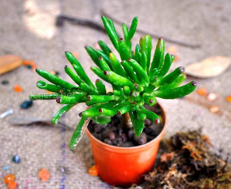 Как  поливать и подкармливать  комнатные растение в зимний период?