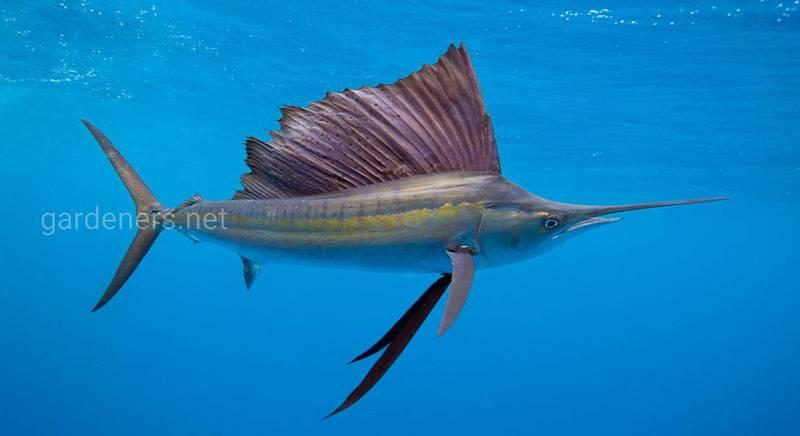 14 интересных фактов о рыбах