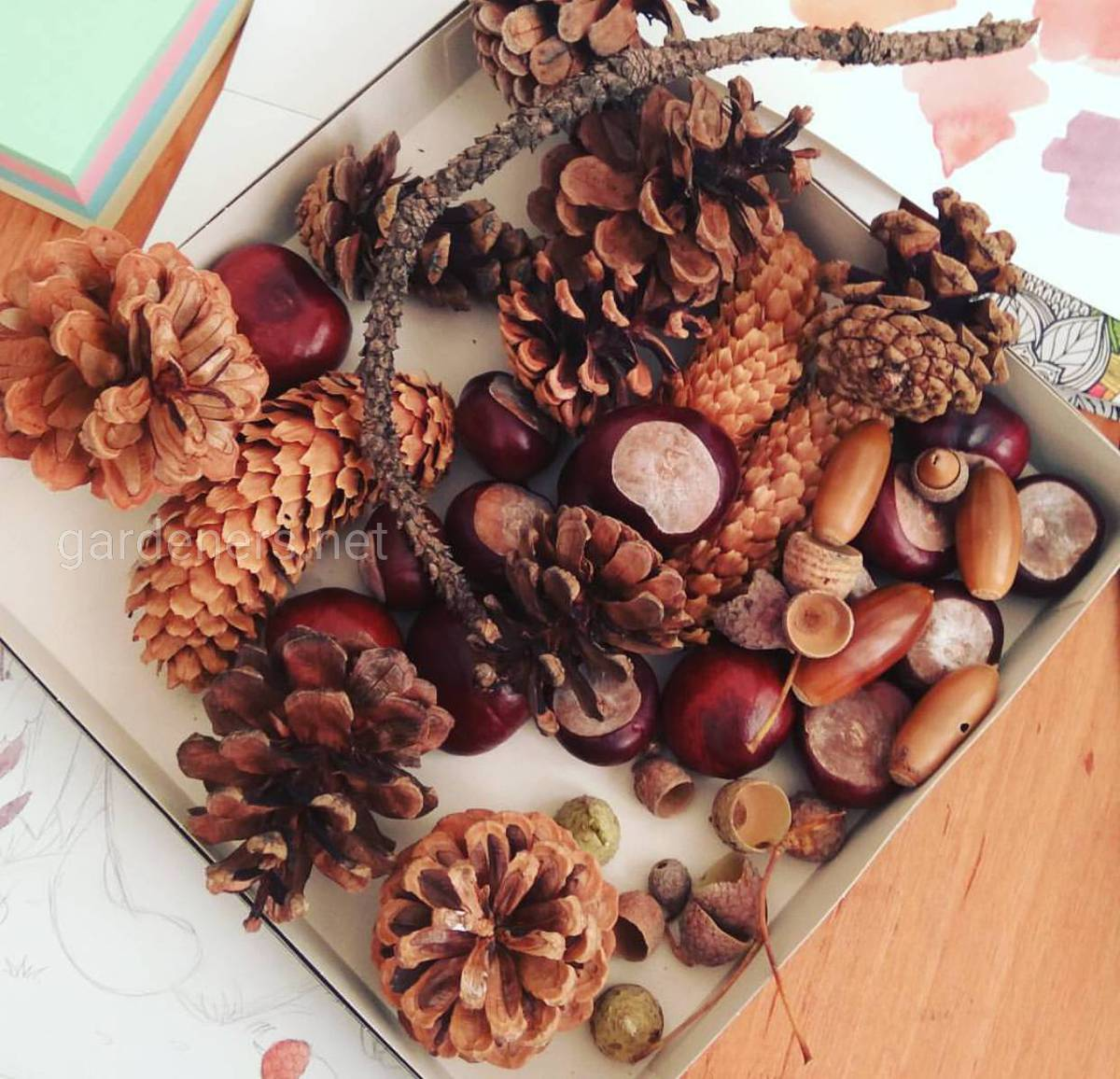 Ингредиенты из леса и огорода для осенних поделок